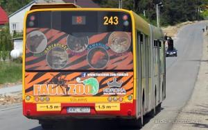 Autobus linii nr 18